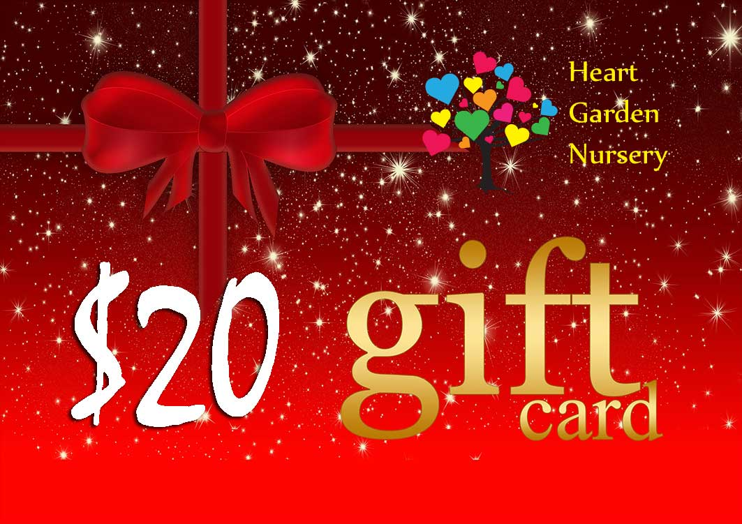 Christmas Gift Card $20 Value
